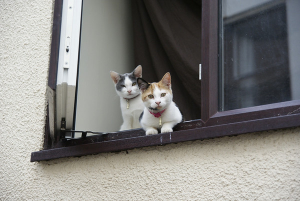 These two kittens seemed very keen to pose for photographs.